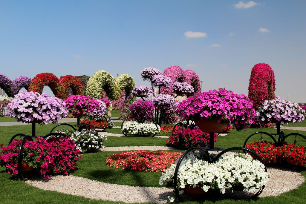 World S Largest Natural Flower Garden In Dubai Flower Garden Nature Garden