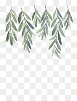 Olive Tree Drawing Unlimited Download Cleanpng Com Aquarela Ilustracoes Aguarela
