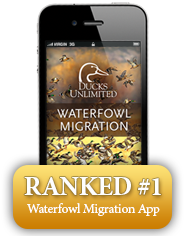 Ducks Unlimited Waterfowl Migration Map & Hunting Reports | Hunting on