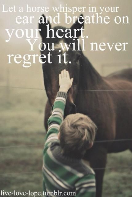 Let a horse whisper in your ear and breathe on your heart. You will never regret it… nor forget it. ♥ #horse #equine #animals #boy #quote