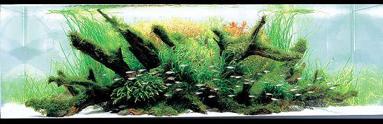 ADA Contest 2007 : World Ranking No.1-27 | Blue Aquarium ...