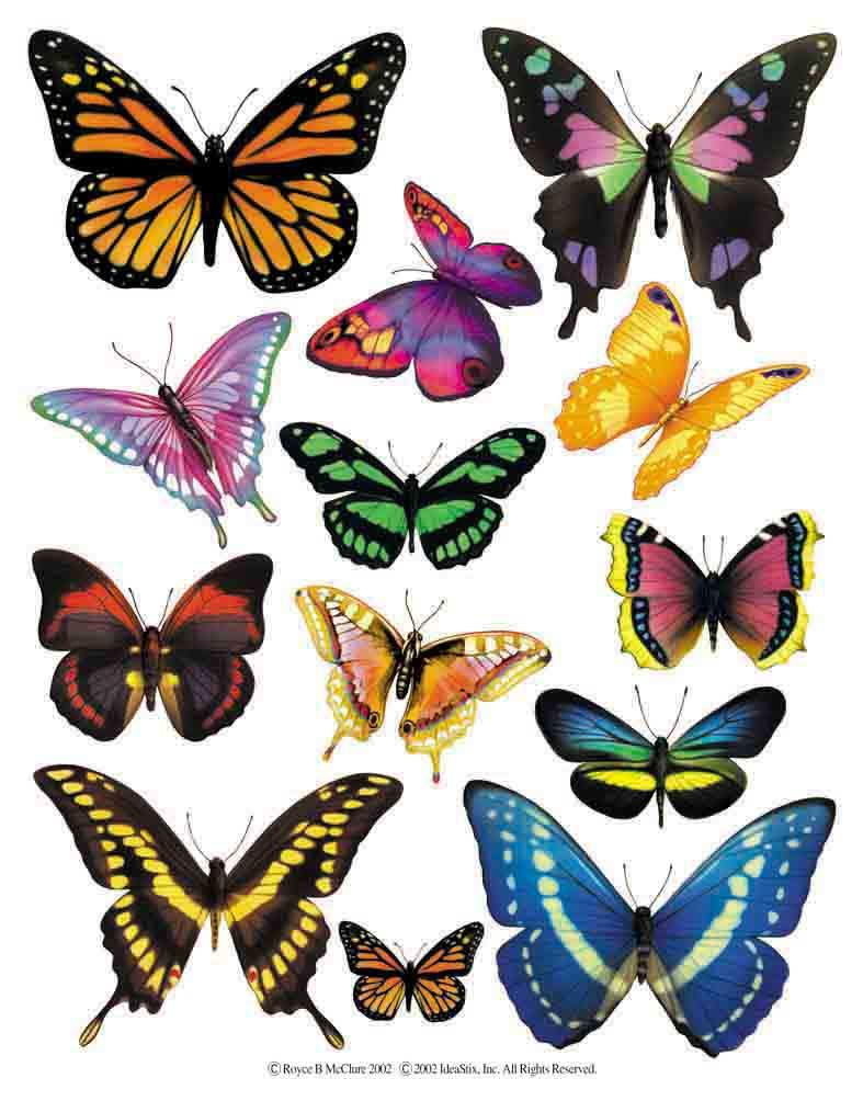 Enlarged view of a sheet of butterfly accent stickers from ...