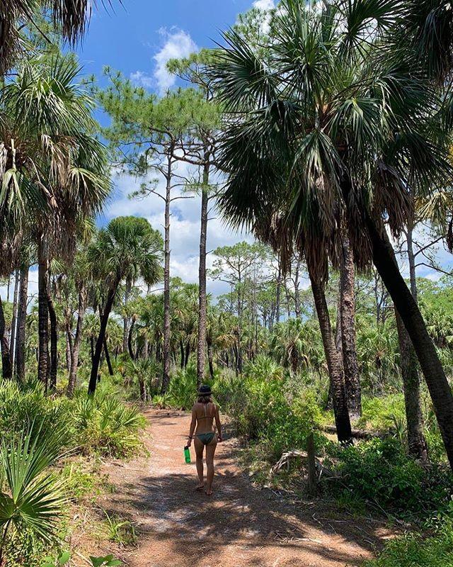 Caladesi Island Florida: This Florida Island Will Make You Feel Like You're In The
