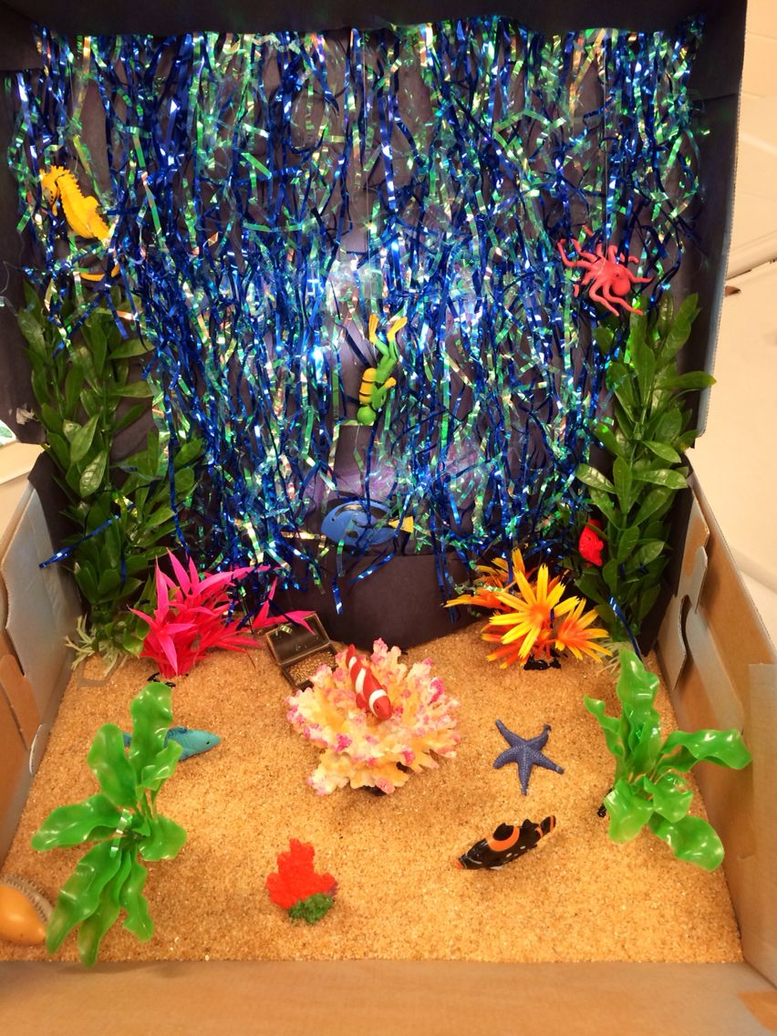 Coral Reef Ocean Biome Diorama Science Project Projects Pinterest Biomes