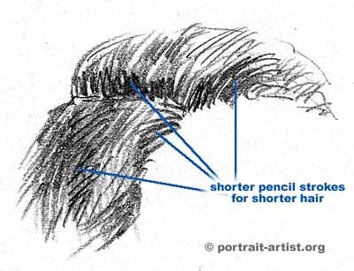 Http www portrait artist org pics hair sketches short jpg