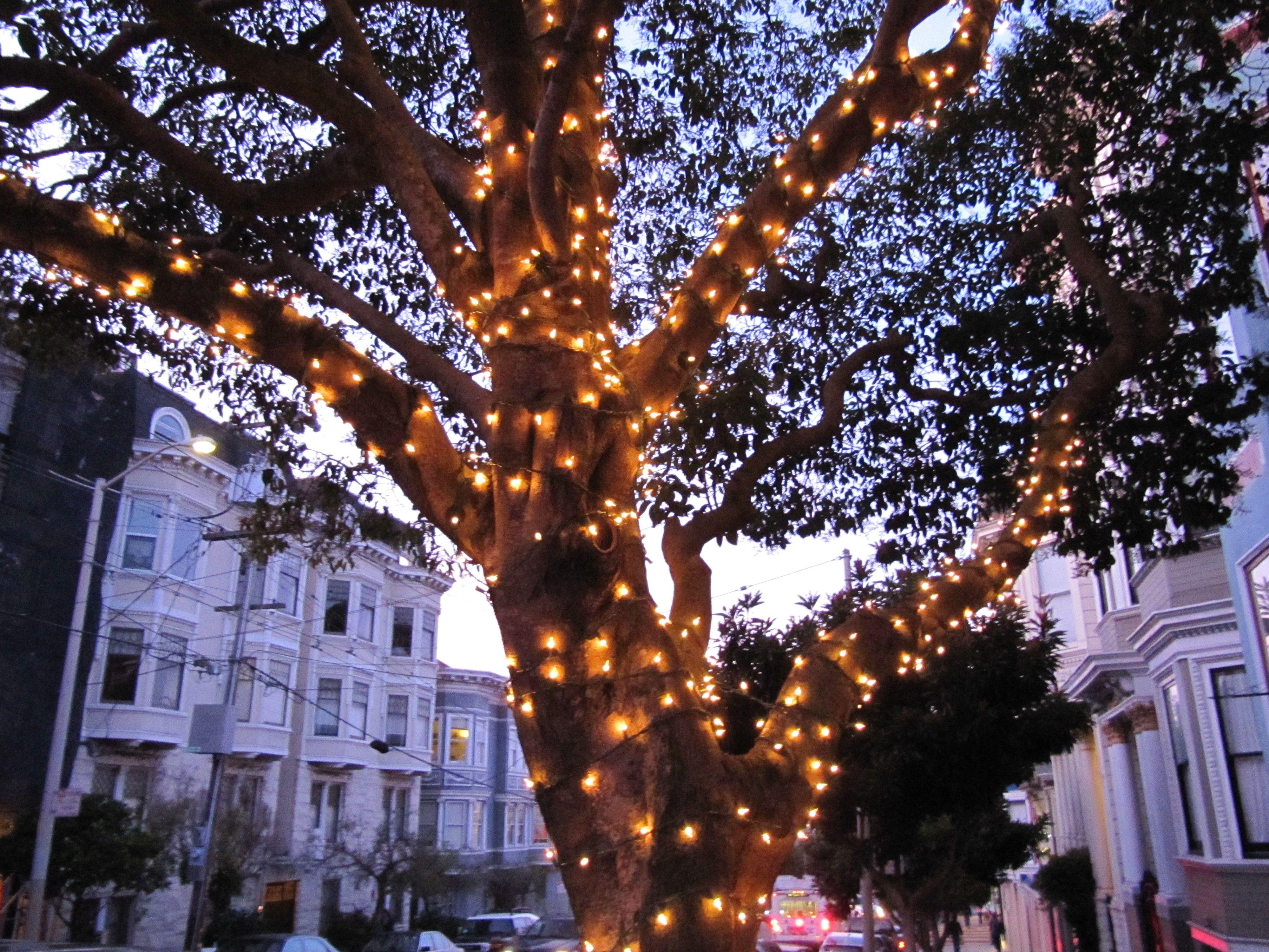 Outdoor Solar Lights For Trees Outdoor Solar Lights Outdoor Trees Outdoor Tree Lighting