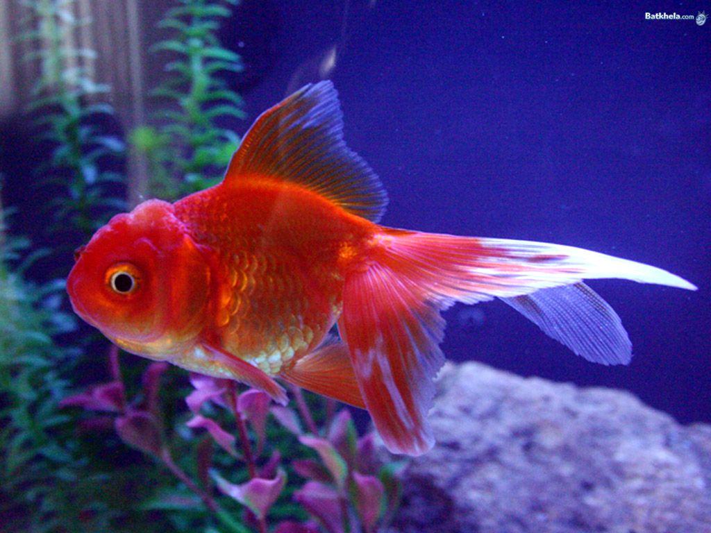 b>fish</b>! - The Animal Kingdom Wallpaper (251177) - Fanpop | Peces ...
