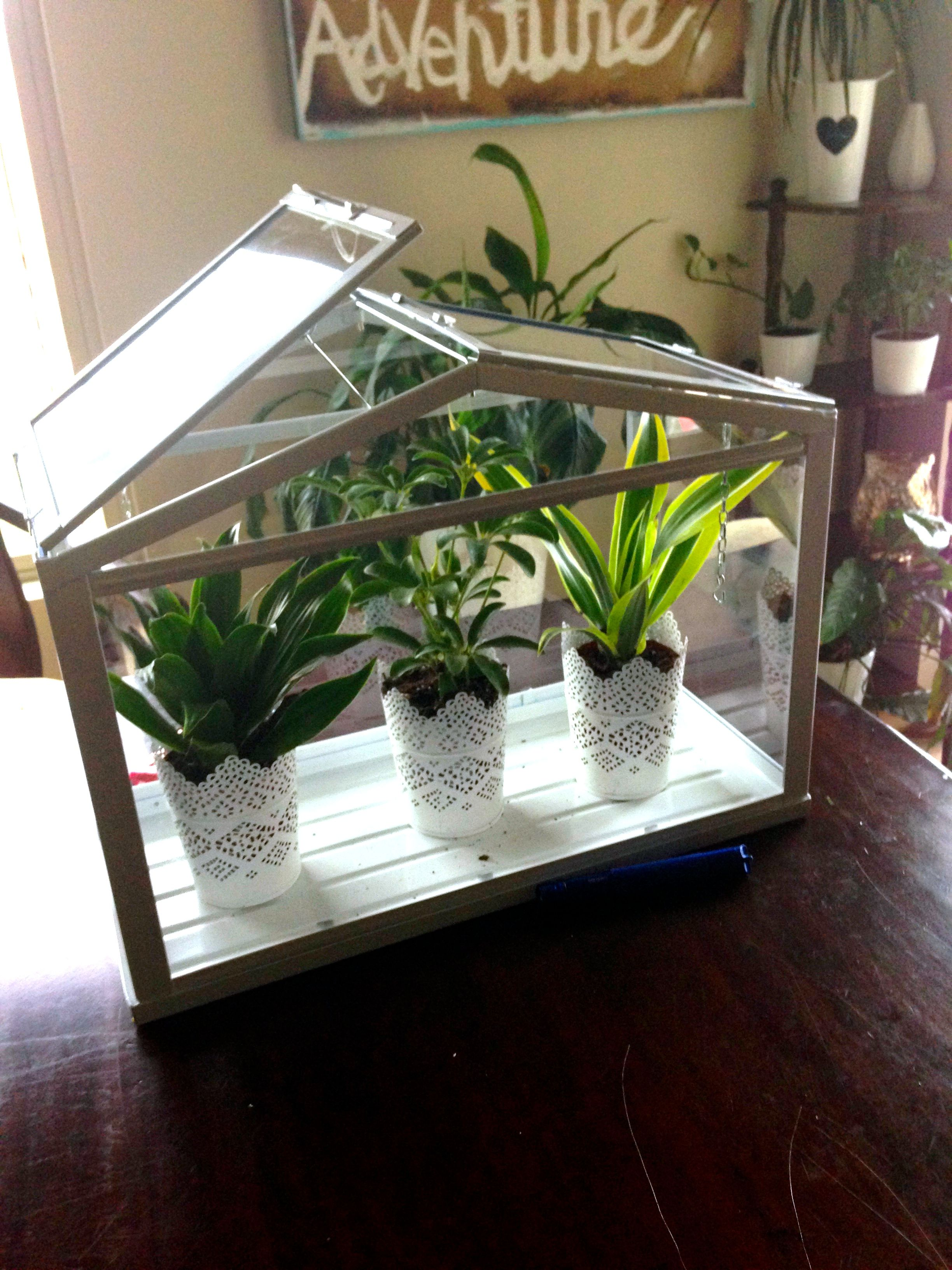 Delightful Easiest Mini Greenhouse EVER