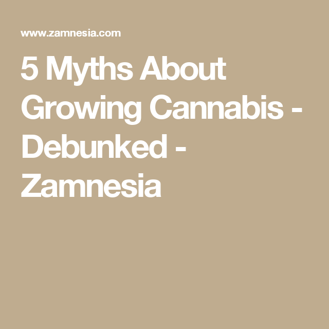 5 Myths About Growing Cannabis - Debunked - Zamnesia