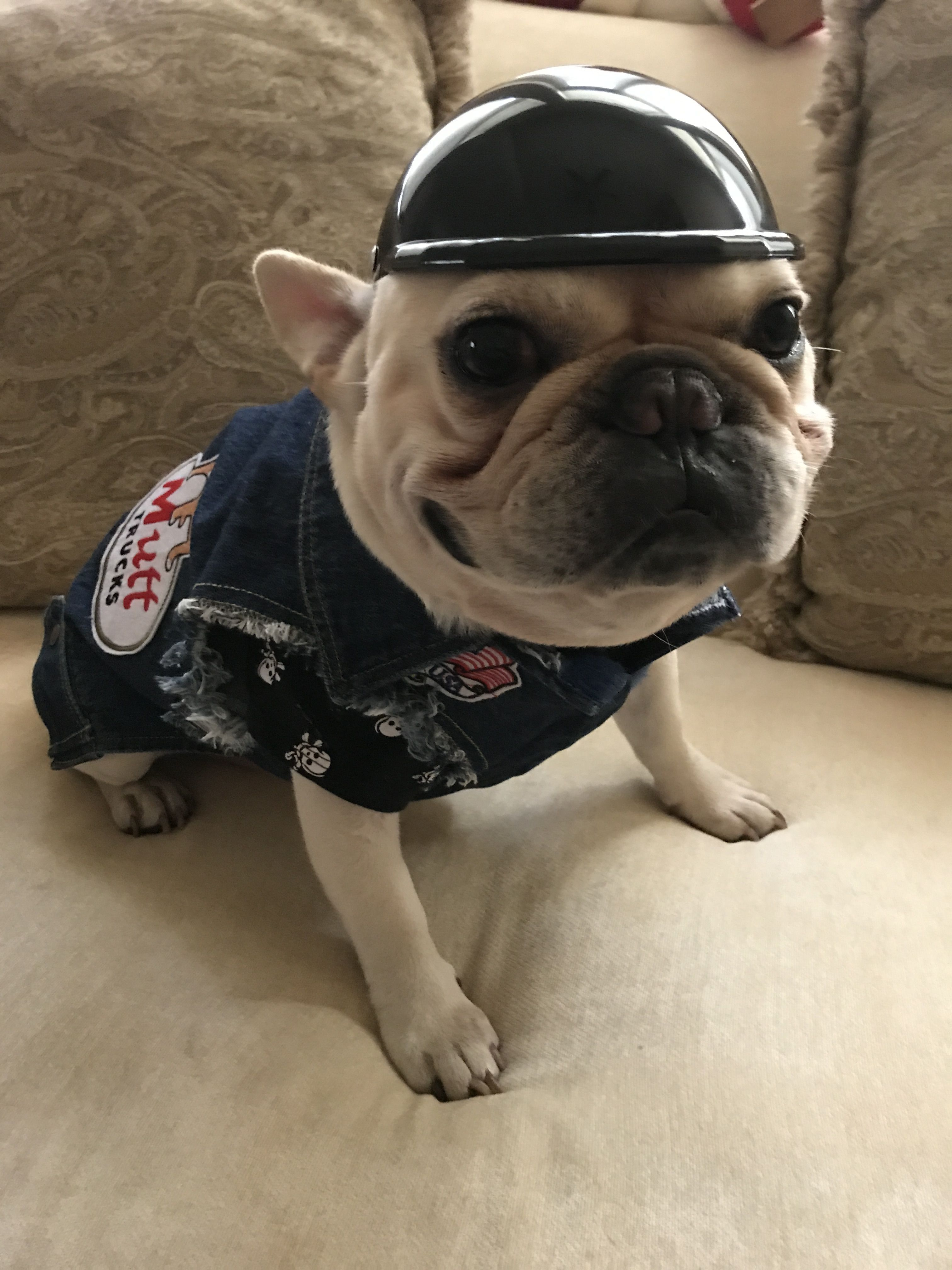 Mom That S A Bowl Not A Helmet Tell Me You Know That Adoptpug