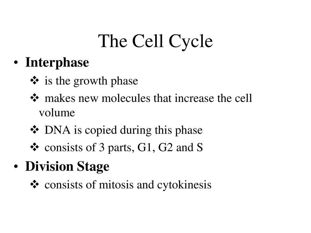 Cell Cycle Review Worksheet Cell Division And The Cell
