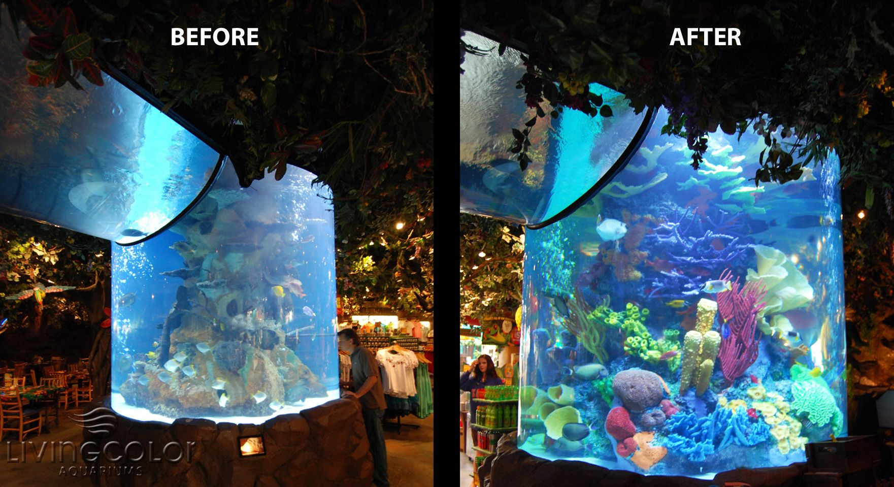 Living color aquarium fish tank kings - Artificial Coral Artificial Reef Living Color Corals And Reefs Rainforest Cafe Volume Gallons Total Aquariums