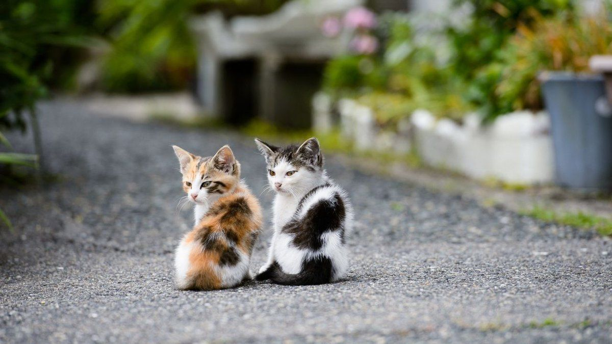 Cute And Stylish Kittens Meow Moe Kittens Cutest Cats Cute Cats