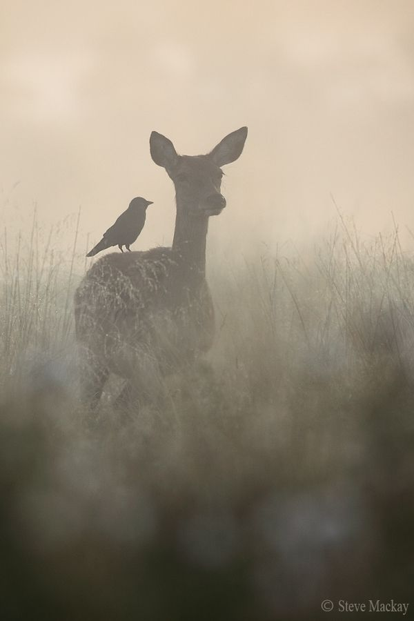 The Doe And The Jackdaw Part 2 By Steve Mackay Via 500px Animals Wild Animals Beautiful Animals