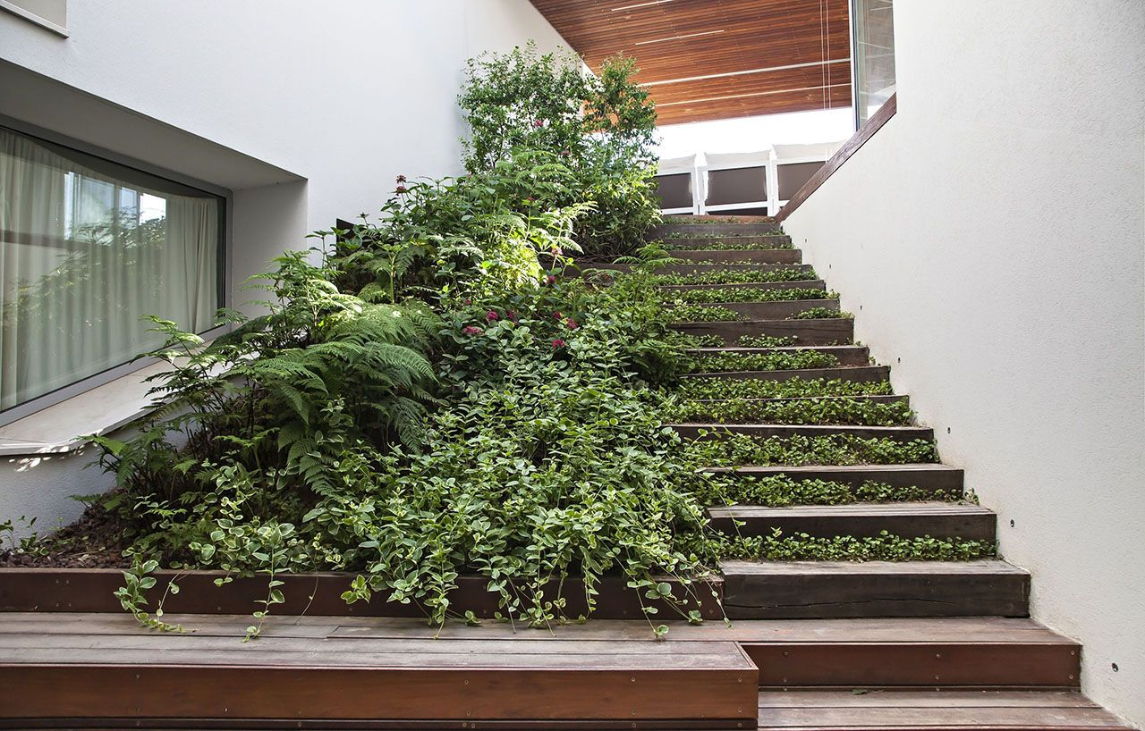 wooden stairs מדרגות עץ וצמחיה Garden design, Green city