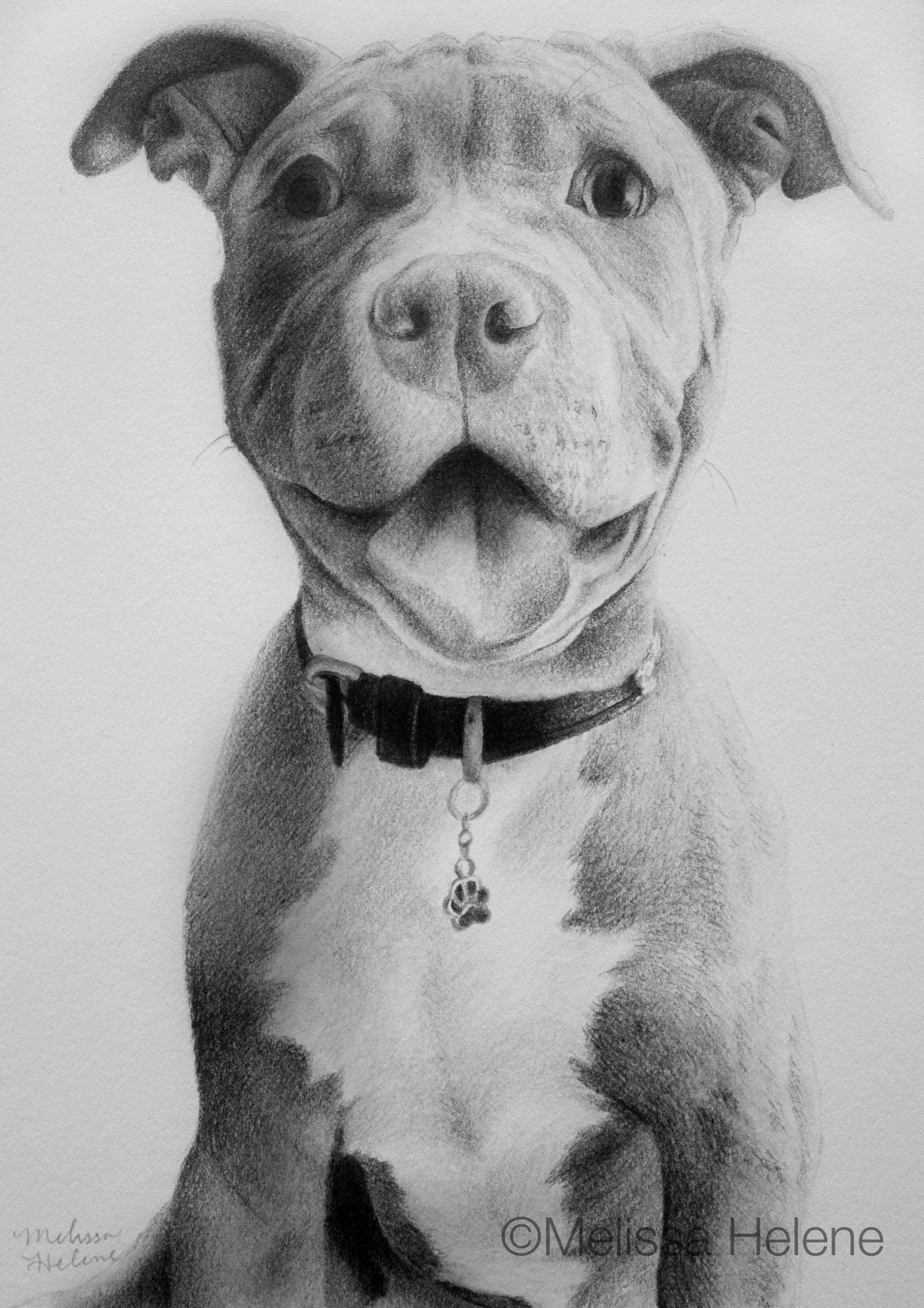 Pitbull Puppy Melissa Helene 5x7 Graphite Pet Portrait