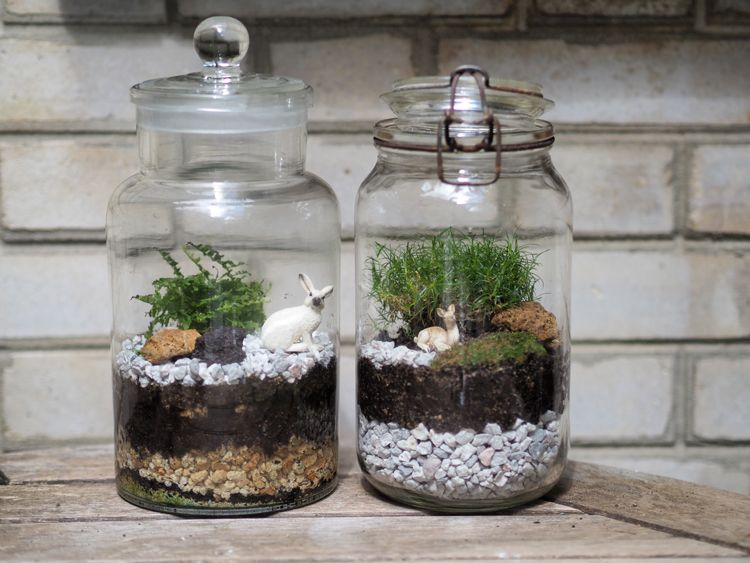 diy comment fabriquer son terrarium terrarium fermer et. Black Bedroom Furniture Sets. Home Design Ideas