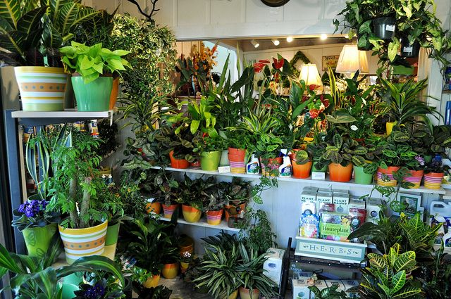 plants for office cubicle. Place A Potted Plant At Your Cubicle! : News . Plants For Office Cubicle