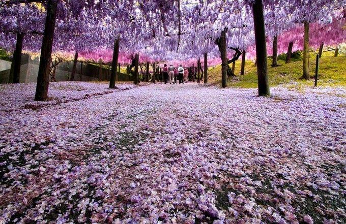 世界の絶景10!宣伝は一切ナシの「河内藤園」の藤棚が幻想的な美しさ   RETRIP