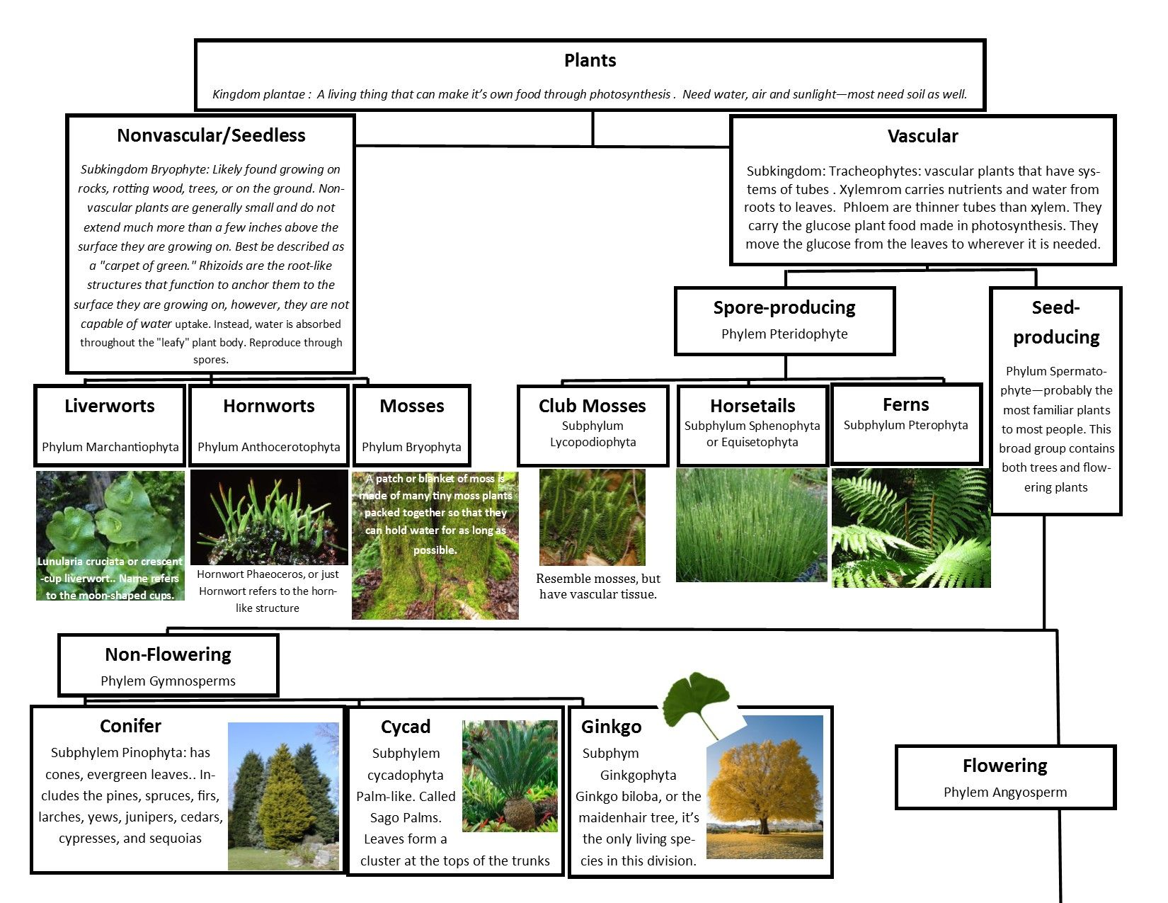 A Leah Bou original! Plant Classification Chart pg 1 of 2. I designed this  flow chart of the main 6 phyl…   Plant classification [ 1275 x 1650 Pixel ]