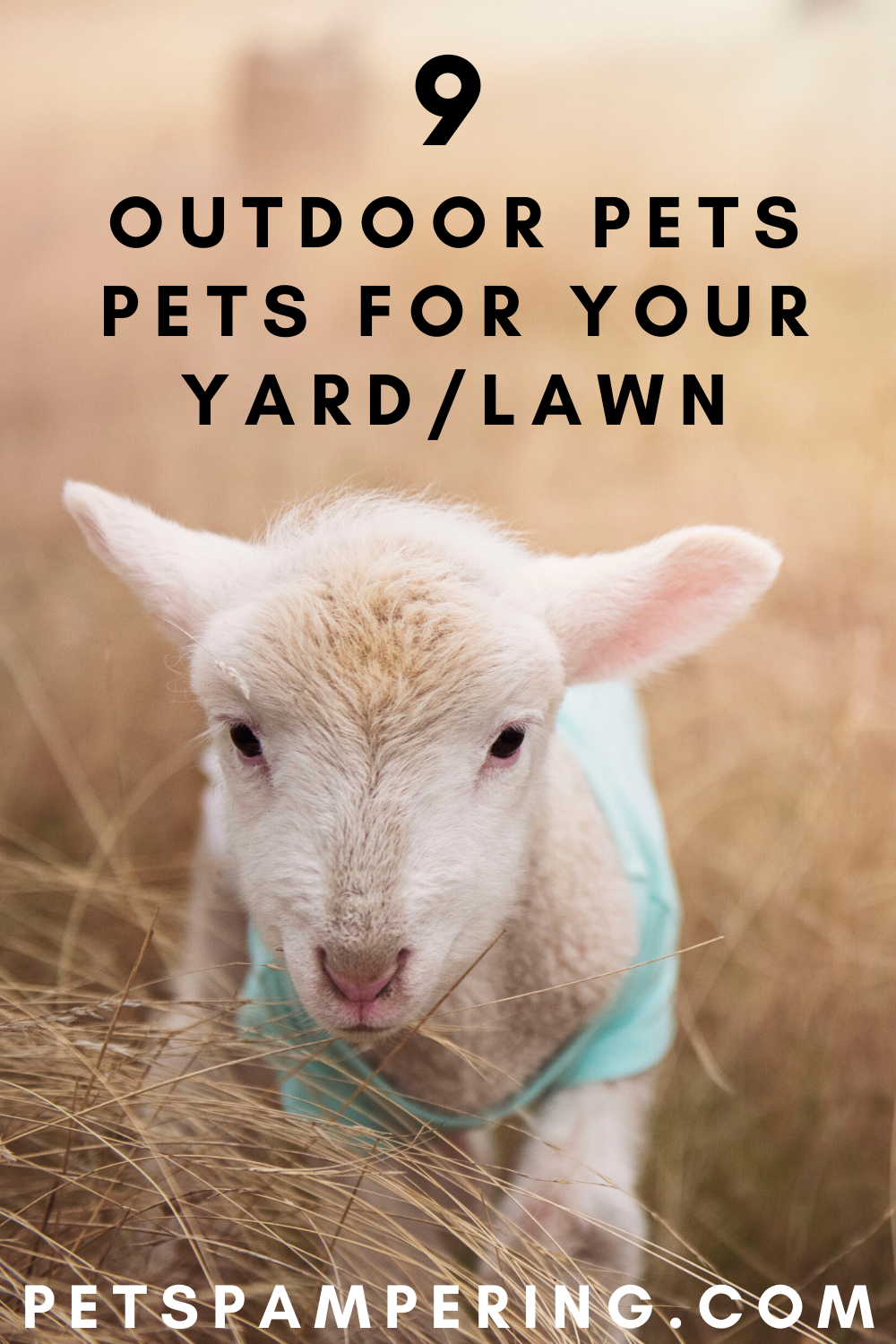 What are Good Outdoor Pets?  Many kids ask me what are the kind of pets to keep outdoors as they have not permission to keep the pet indoors by their parents. Well for that I have done the research and came up with the following choices.  #pets #petstagram #petsofinstagram #petsagram #petsofig #petshop #petscorner #petsgram #petsitting #petsmart #petsitter #petsofinsta #petsoninstagram #petsarefamily #petslover