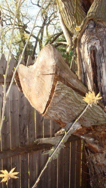 My Photography- GinaMarie. Heart Tree