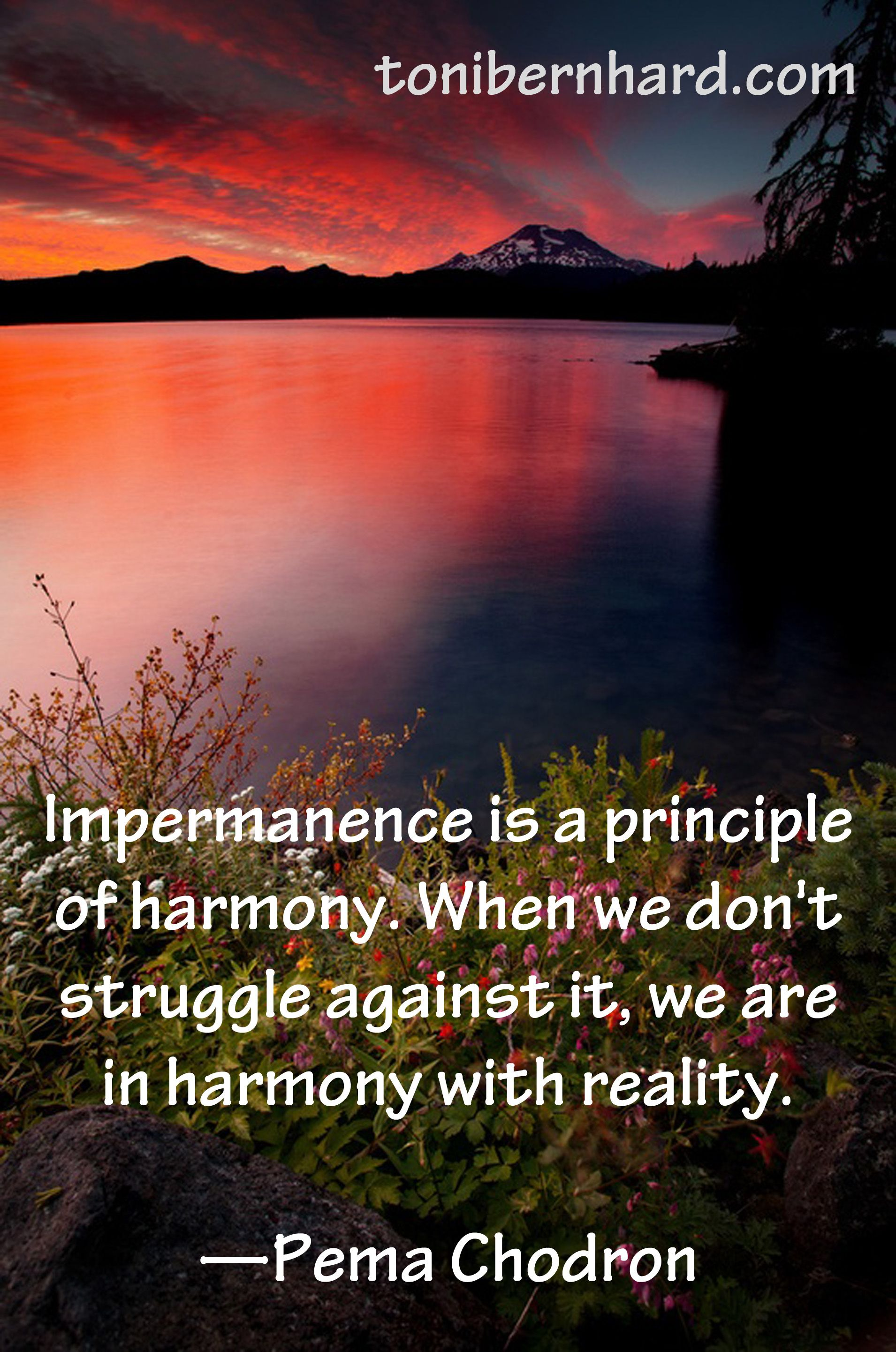 Pema Chodron Quotes Pema Chodron Be In Harmony With Realitynot Struggling With