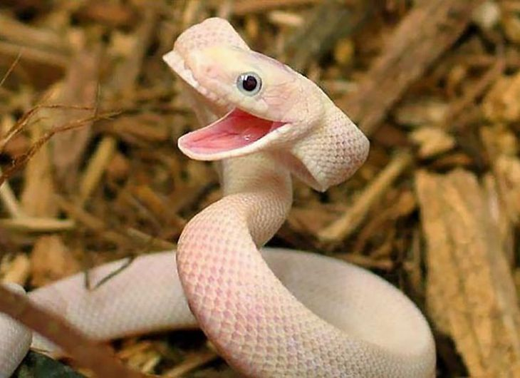 Top 35 Smiling Animals That Are Really Cute - Soupoffun.com