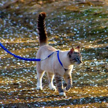 I Want This For My Cat Gentle Leader Cat Leash Dog Supplies