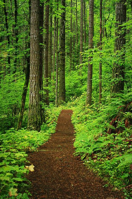The Path To Peace Of Mind Beautiful Nature Forest Path Landscape