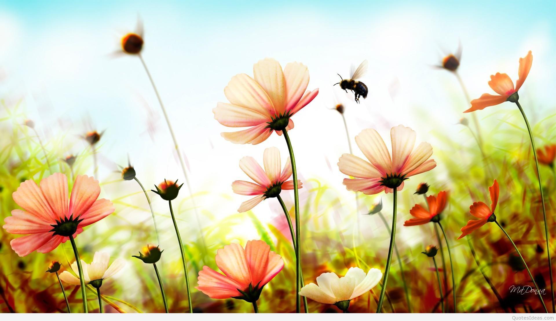 Summer Beach Wallpaper Wallpapers Hd Carwalluscom Deskto Summer Wallpaper Flower Wallpaper Wallpaper Iphone Summer