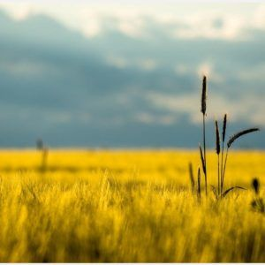 Dry Grass Field Landscape Wallpaper Landscape Wallpaper Nature