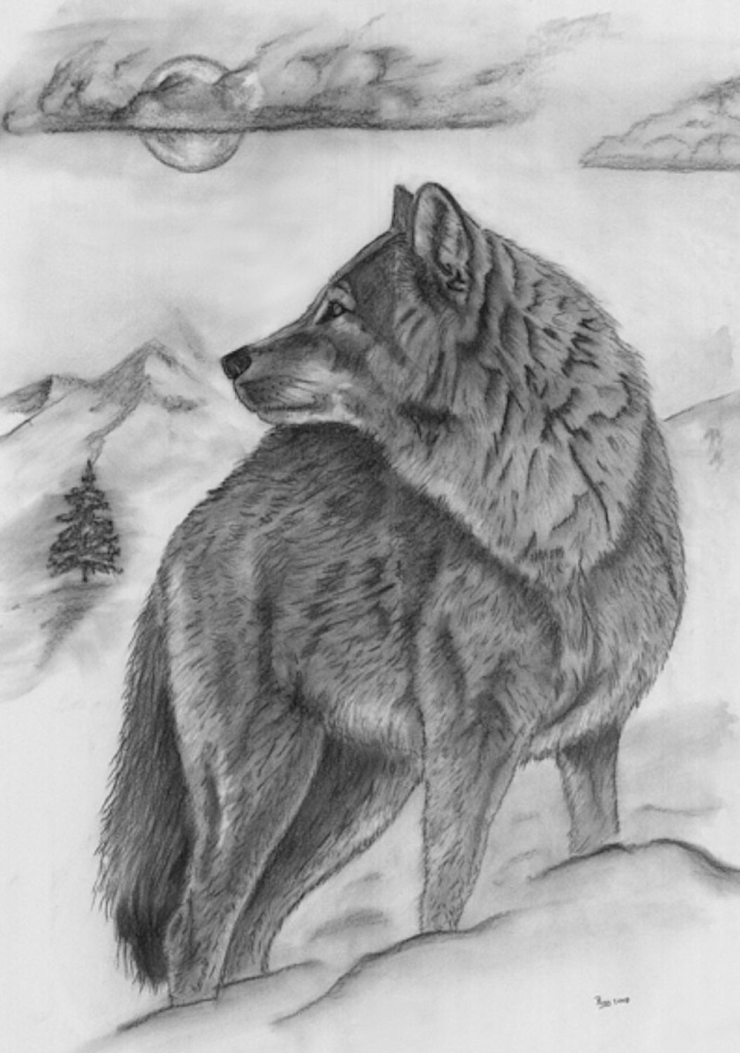 Draeing Grizzly Cubs Charcoal Drawing The Lone Wolf The