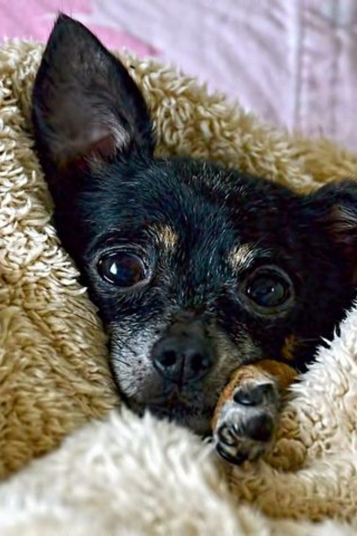 Top 20 Cutest Dog Breeds around the World Pregnant dog