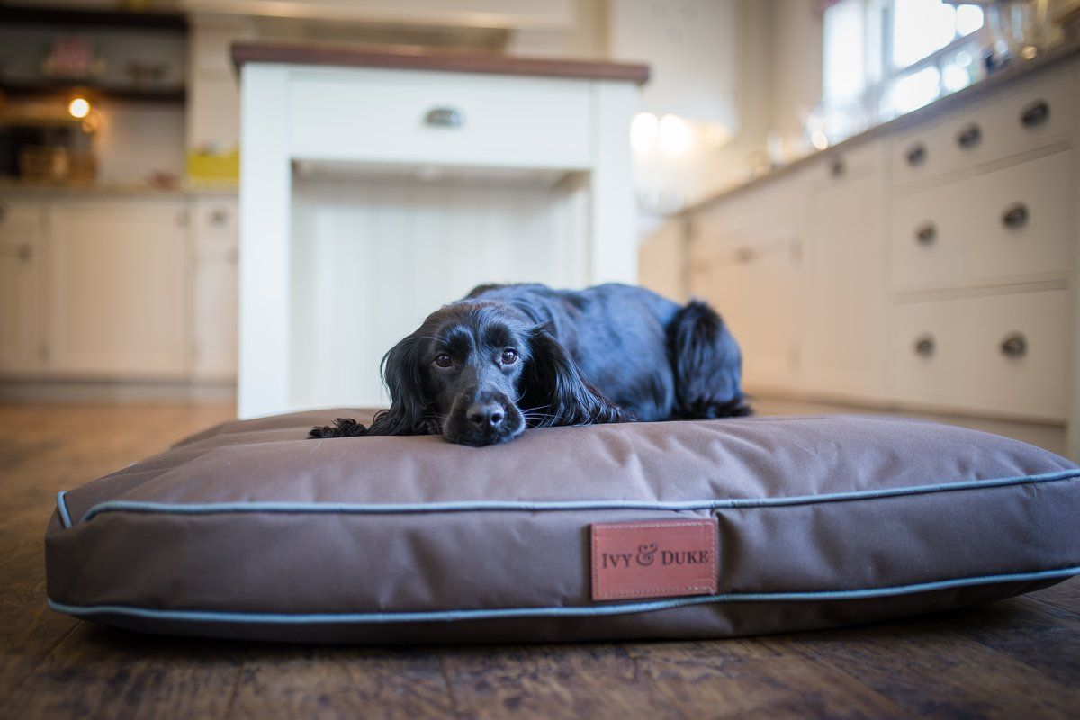 Pedigree Tuff Mutt Memory Foam Waterproof Dog Bed Made From Robust Pvc Backed 600 Denier Polyester Waterproof Material Made I Waterproof Dog Bed Dogs Dog Bed
