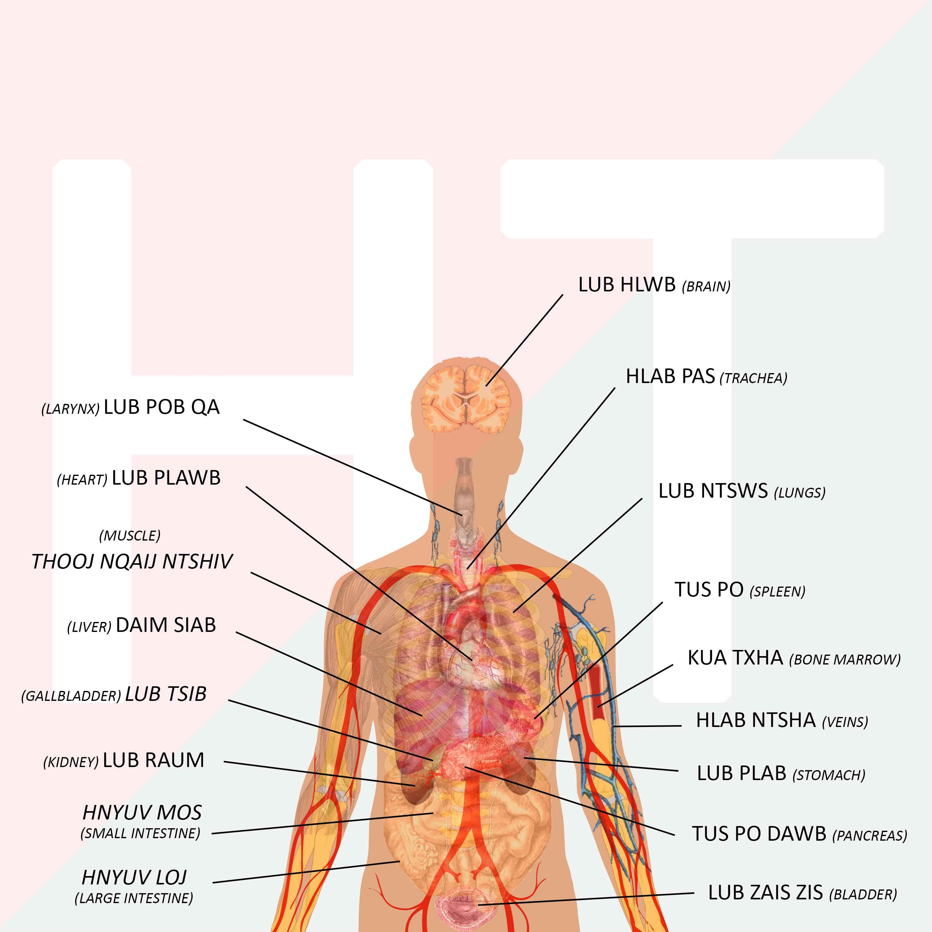Internalexternal Body Parts In Hmoob Language Learning Tools In