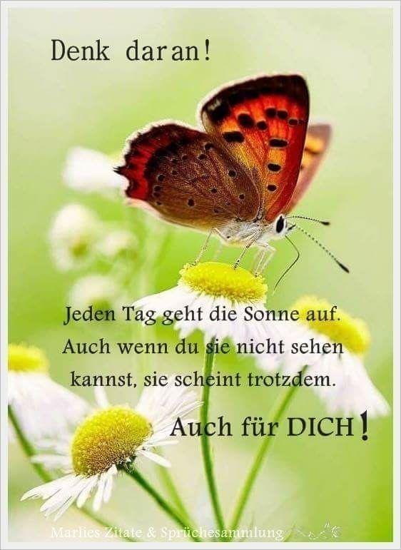 Danke Daizo   Sprüche #laternebastelnkinder