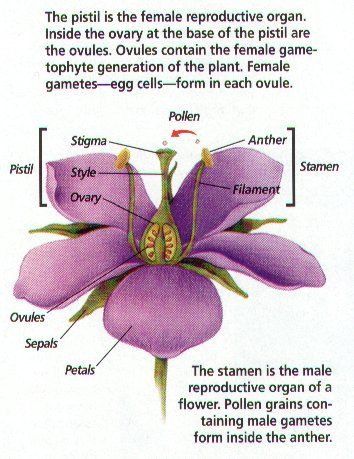 Plant Reproduction With Images Plant Bud Plant Life Cycle Plants