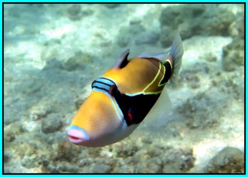 Hawaii A Place In The World Best Snorkeling Fish Pet Fish