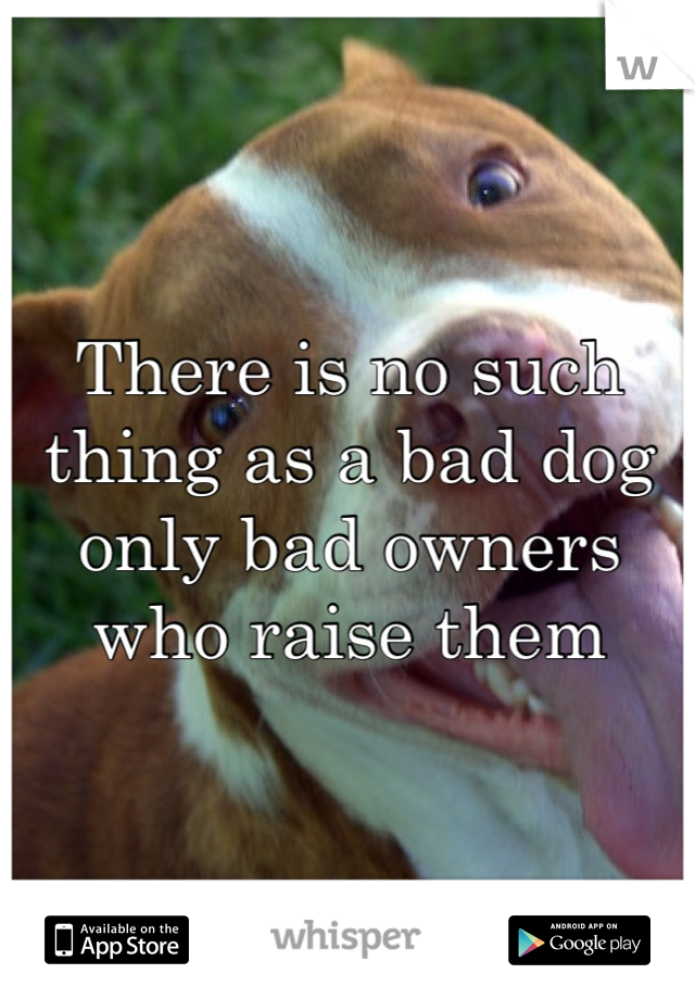 No bad dogs only bad owners