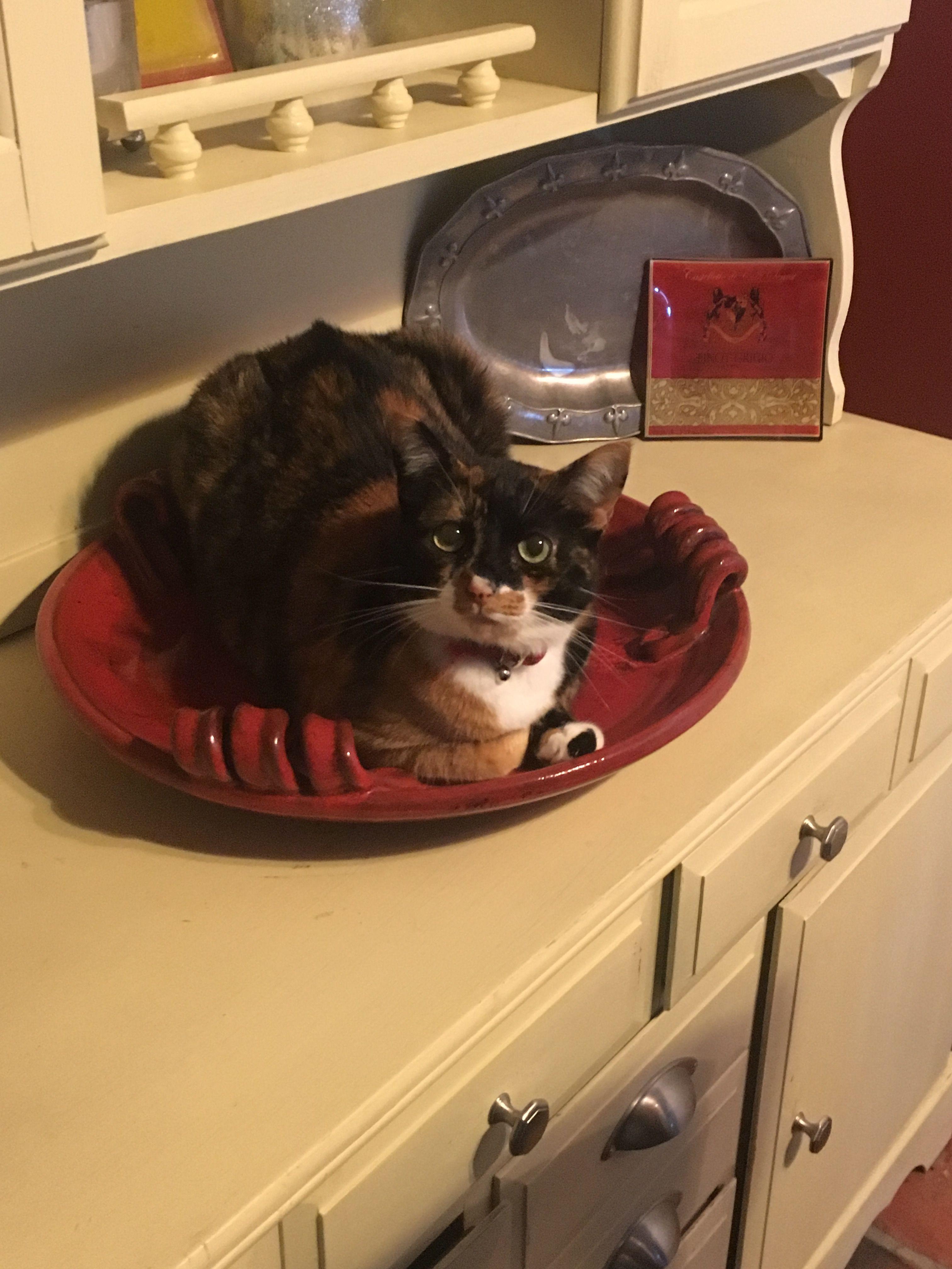 If it fits, it sits 😂 reesie Fur babies, Animals, Cats