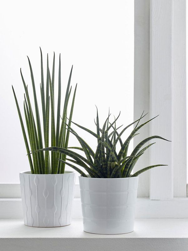 Las 20 plantas de interior m s resistentes jardines y for Plantas decorativas resistentes