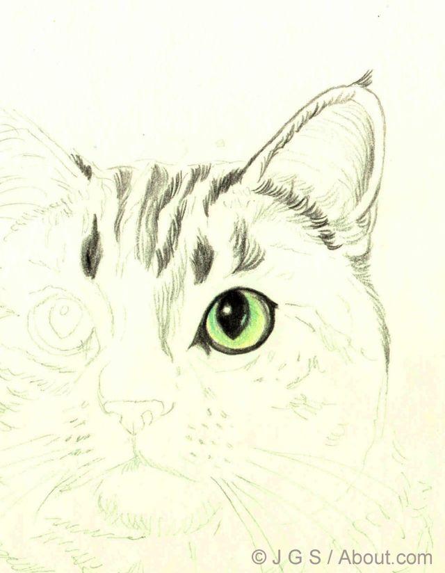 Draw A Majestic Cat In Colored Pencil Color Pencil Drawing Drawings Pencil Drawings
