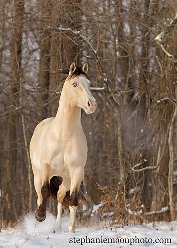 ☀Beautiful horse, love the colour