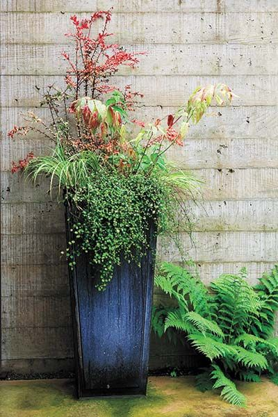 Easy-Care, Low-Water Container Gardens   Fall planters ...