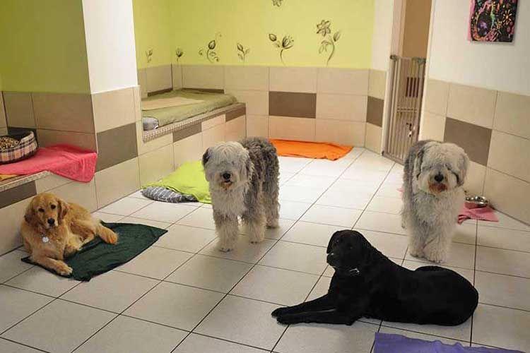 Fourdogs Hundehotel Hundezimmer Hundezimmer Hunde Idee