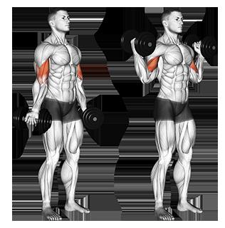Standing Dumbbell Inner Biceps CurlIndia's future engineer�� Anurag Holkar and fitness lover���#love my bae �my love��� @anushkasen0408����� For more�� follow� ����������️ �� �