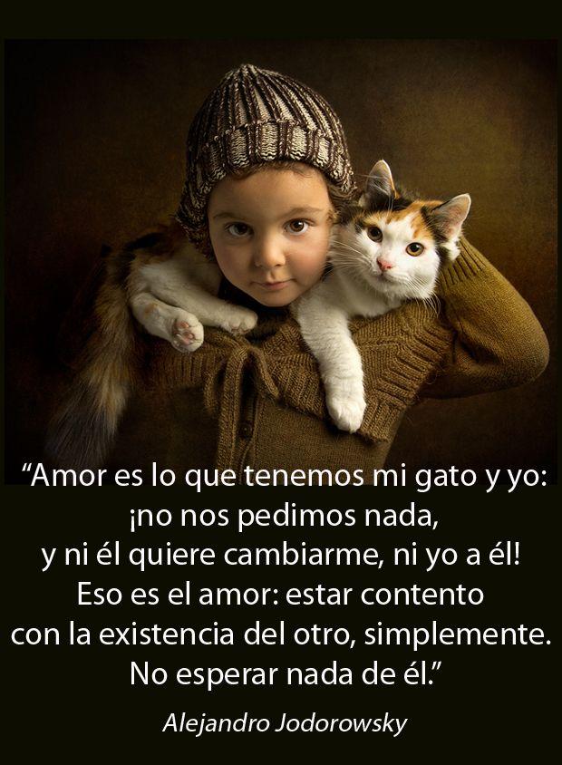 Amor Y Gatos Frases Gatos Gatos Y Amor Incondicional