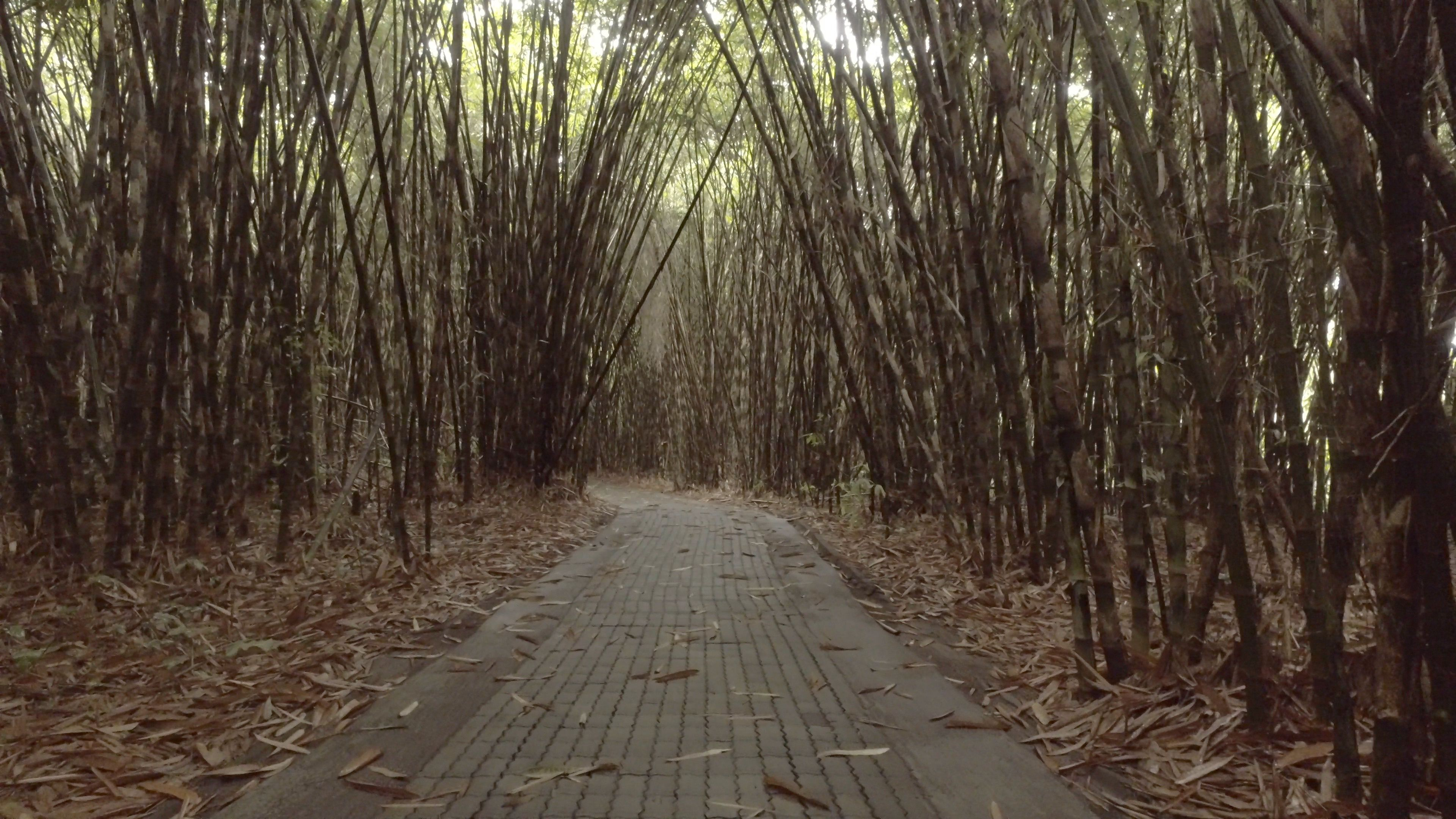 Bamboo Forest In Bali Indonesia Shot In 4k Resolution No People Only Nature Stock Footage Ad Indonesia Shot Bali Bamboo Bamboo Forest Green Scenery Bali