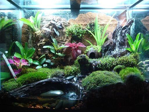 Poison dart frog terrarium frog pinterest frog for Fish tank frogs